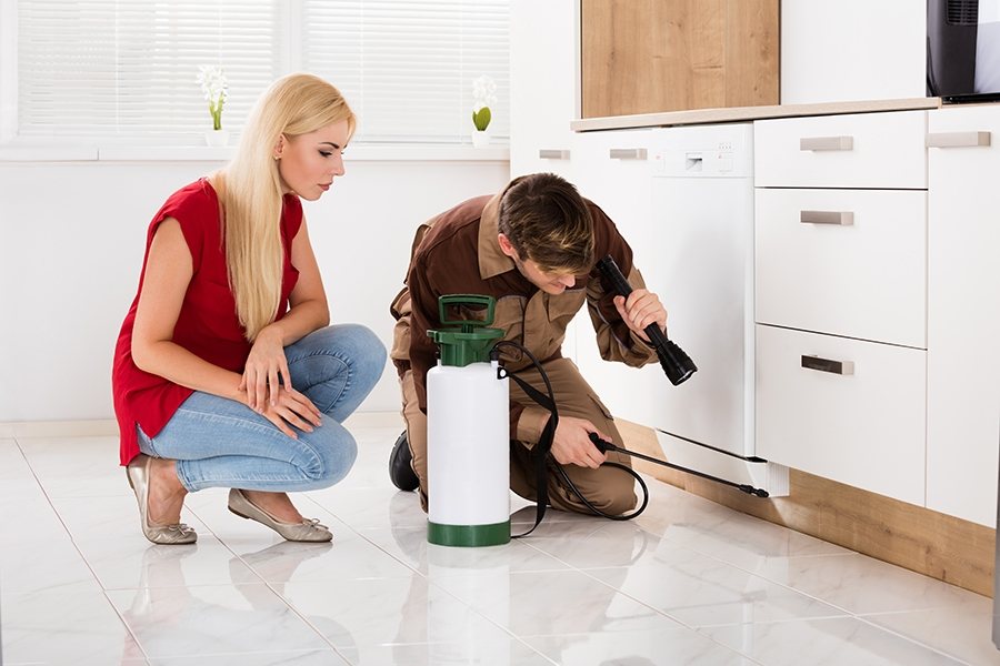 , Must-Have Pest Solution Items for Your Home, Saubio Making Wealth