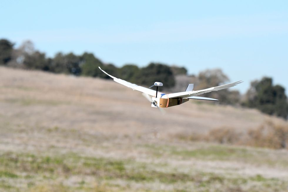 , The PigeonBot Drone, Saubio Making Wealth