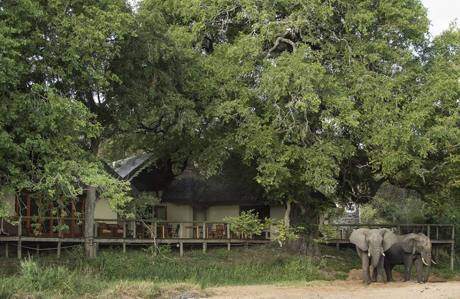 , Tintswalo Safari Lodge, Star of the Mayeleti, Saubio Making Wealth