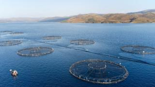 , Scottish salmon producers warn of 'huge' Brexit burden, Saubio Making Wealth