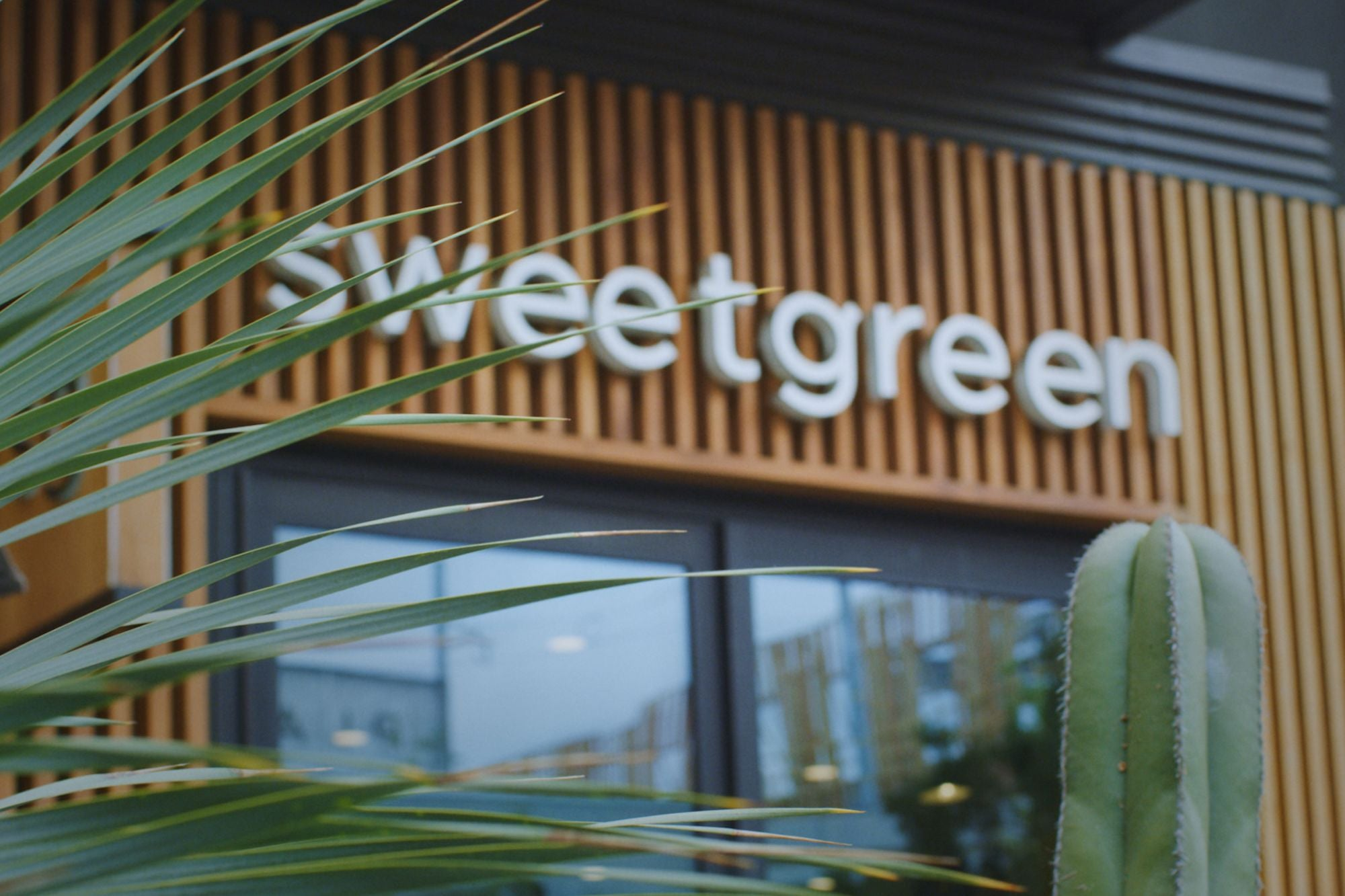 , Sweetgreen Success: From Dorm Room Startup to Fast-Casual Salad Empire, Saubio Making Wealth