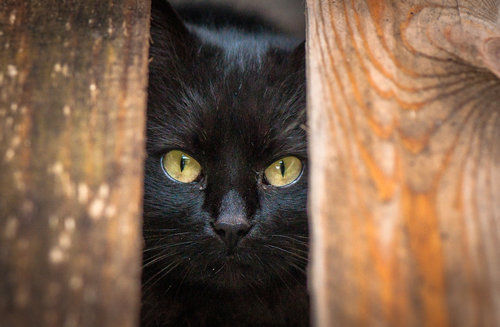 , 6 Trainable Behaviors Your New Feline Needs To Learn, Saubio Making Wealth