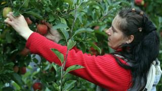 , Eastern Europeans to be flown in to pick fruit and veg, Saubio Making Wealth