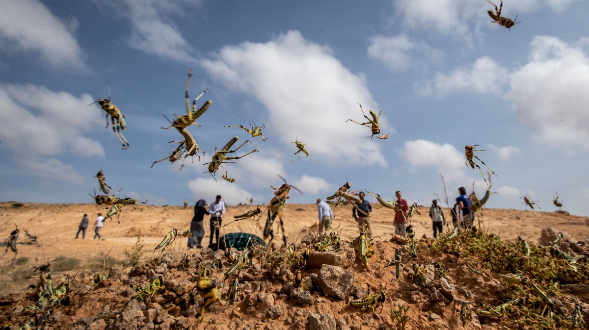 , Why This Year's Locust Invasion Is Setting Off Global Panic, Saubio Making Wealth