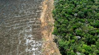 , Climate change: New UK law to curb deforestation in supply chains, Saubio Making Wealth