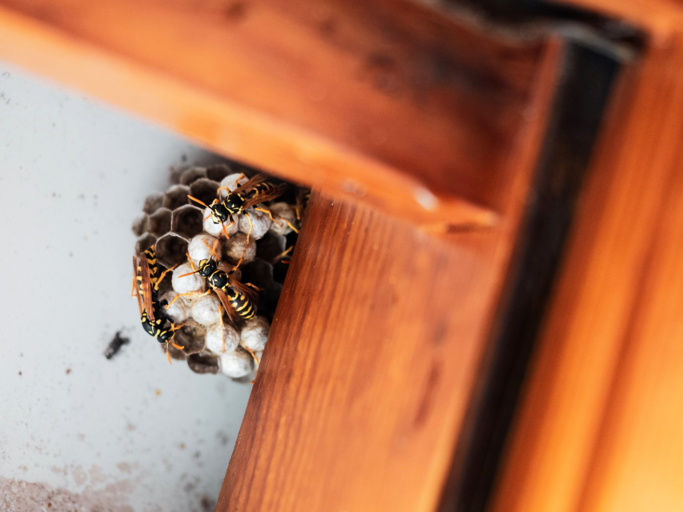 , How To Safely Remove Wasp Nests From Your Home, Saubio Making Wealth