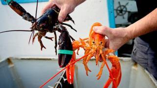 , US wins end of EU lobster tariffs in mini trade deal, Saubio Making Wealth