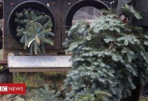 , Christmas tree sales to go ahead despite lockdown, Saubio Making Wealth