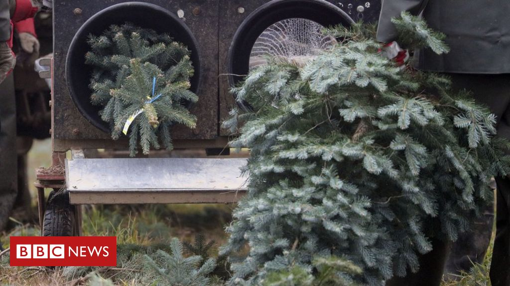 , Christmas tree sales to go ahead despite lockdown, Saubio Making Wealth