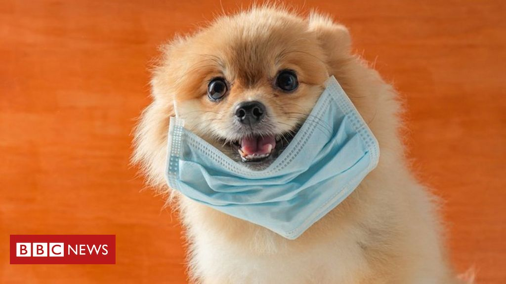 , Pets at Home says pets have been 'a lifesaver' during lockdown, Saubio Making Wealth