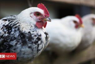 , Bird flu: All captive birds in Britain to be kept indoors amid outbreak, Saubio Making Wealth