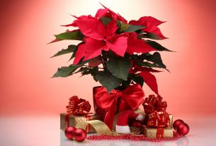 , Christmas Eve, the flower of the Aztec warriors that Mexico gave to the world, Saubio Making Wealth