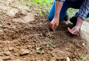 , Simple Tips and Tricks That Will Improve Your Gardening Skills, Saubio Making Wealth