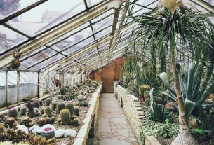 , Why Now Is the Perfect Time for a Greenhouse, Saubio Making Wealth