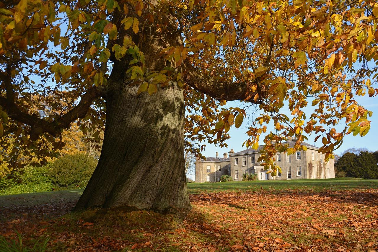 , How to Honor Your Irish Heritage, Saubio Making Wealth