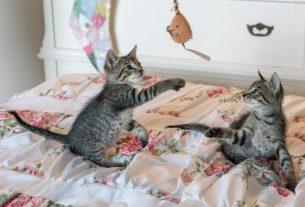 , Is It Hard to Discipline a Cat?, Saubio Making Wealth