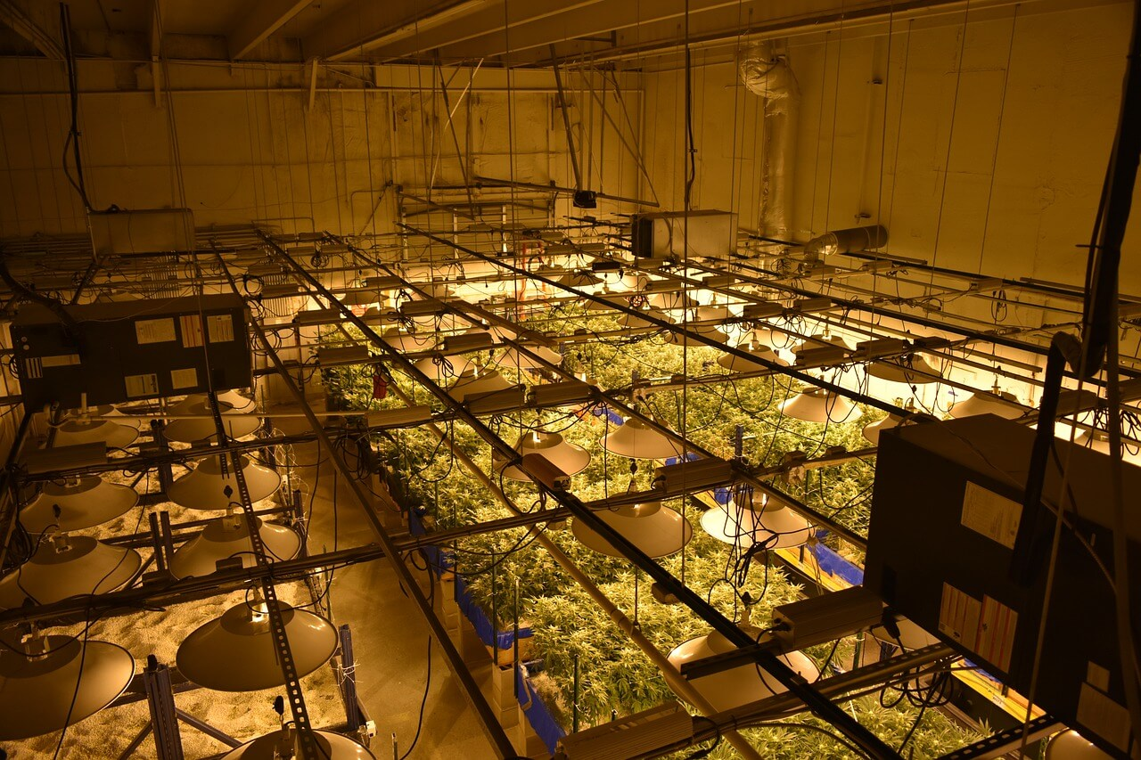 , Mistakes to Avoid When Growing Your Own Cannabis, Saubio Making Wealth