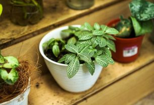 , Proper Steps in Growing Your Own Plants At Home, Saubio Making Wealth
