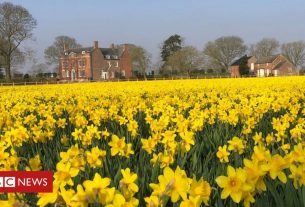 , 'I harvest 70 million daffodils a year but £1 a bunch can't last', Saubio Making Wealth