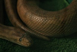 , Snake Care Guide: Are Pet Snakes High Maintenance?, Saubio Making Wealth