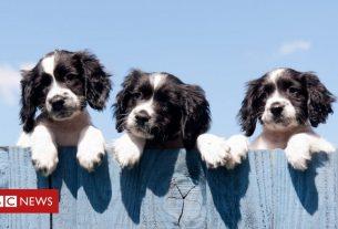 , Households 'buy 3.2 million pets in lockdown', Saubio Making Wealth