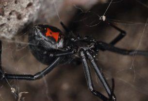 , Spider Silk Could Save the World, Saubio Making Wealth