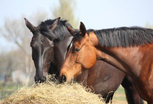 , Top Ways to Make Sure the Animals You Have Aren't Stressed Out, Saubio Making Wealth