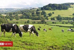 , Australia trade deal: Ministers discuss British farmers' concerns, Saubio Making Wealth
