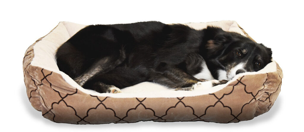 , Everything Your Dog Needs To Feel Safe And Most At Home, Saubio Making Wealth