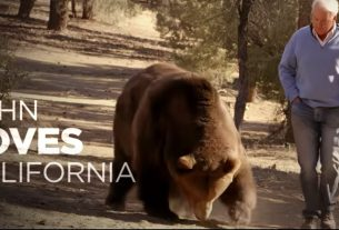 , Nothing Says You're a Serious GOP Candidate More Than a 1,000-Pound Grizzly Bear, Saubio Making Wealth