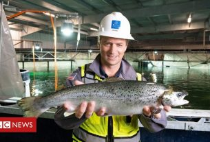 , The salmon you buy in the future may be farmed on land, Saubio Making Wealth
