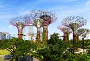 , Things to do in your downtime on a business trip to Singapore, Saubio Making Wealth