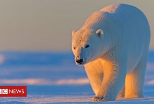 , Alaska: Biden to suspend Trump Arctic drilling leases, Saubio Making Wealth