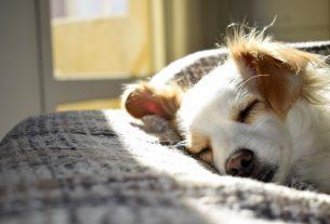 , Ways to Prevent Fleas on Your Dog, Saubio Making Wealth